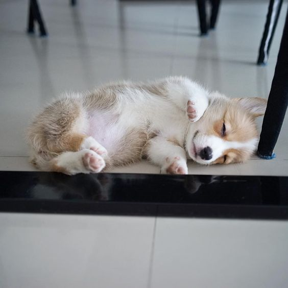 Photos Of Sleeping Pups Are Taking Over The Internet