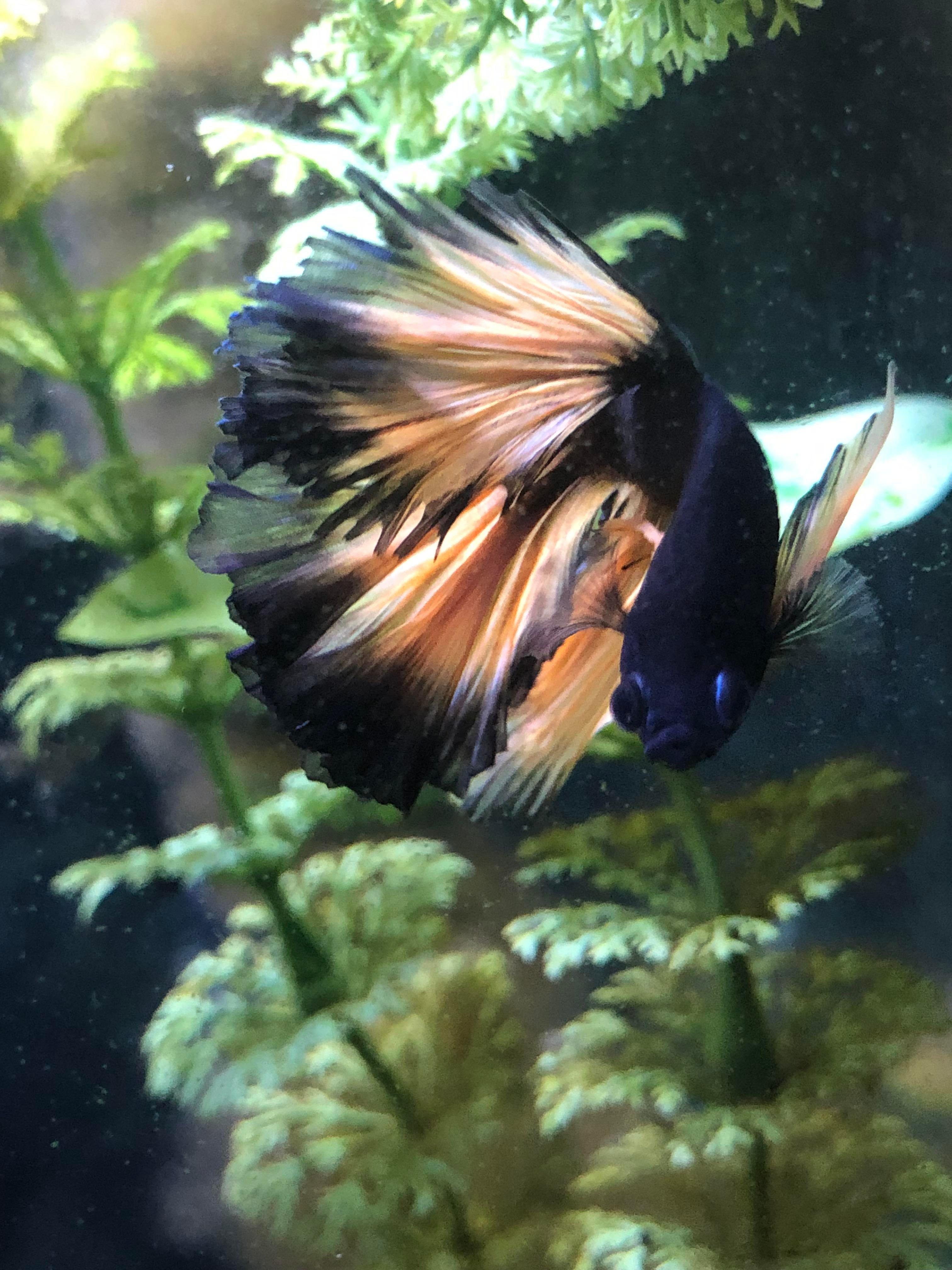 Photos Of The Most Beautiful Fish Betta Fish
