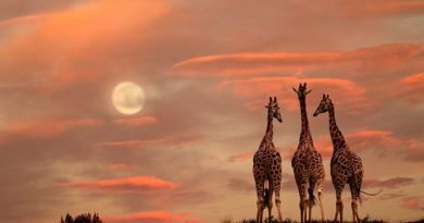 46 Beautiful Wild Animals Photos The True Beauty Of Wildlife