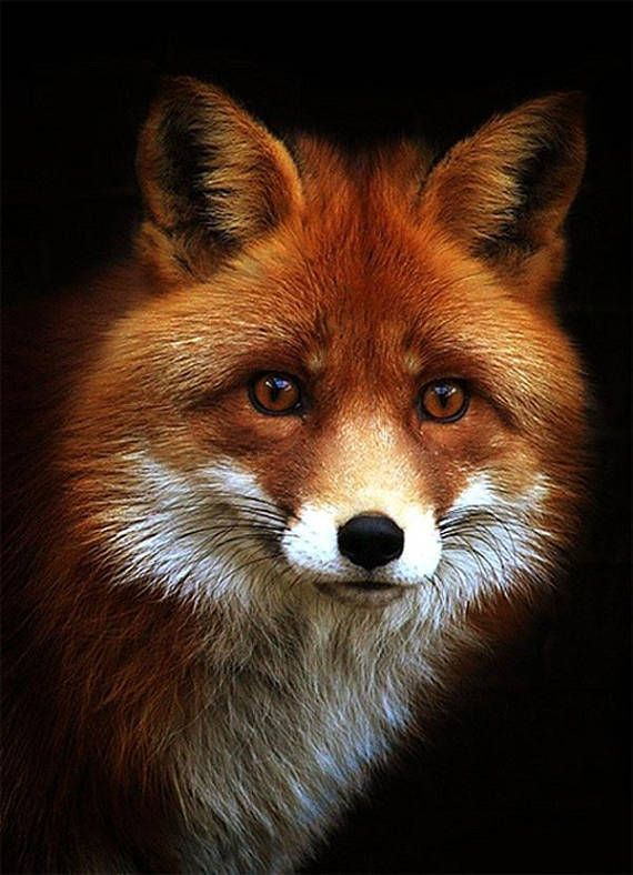 Cute Photos Of Some Very Friendly Foxes