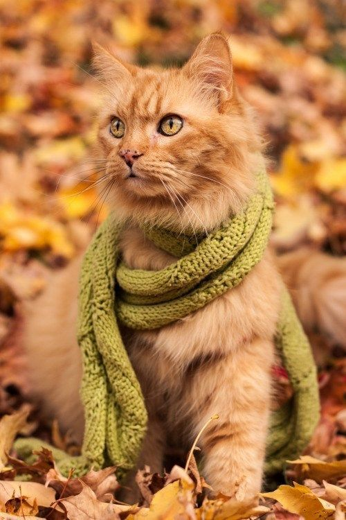 Autumn Cats - Images of Cats Loving Fall