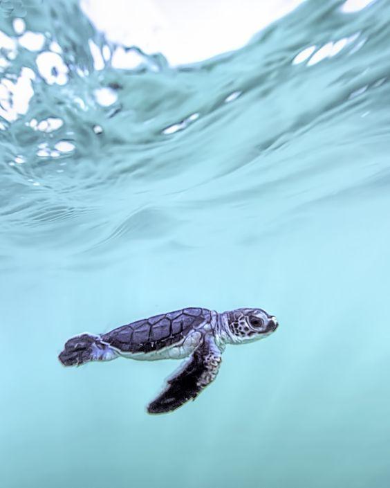 Amazing Sea Animals You Will Love