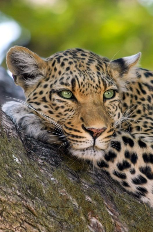 Beautiful Wild African Animals to SEE