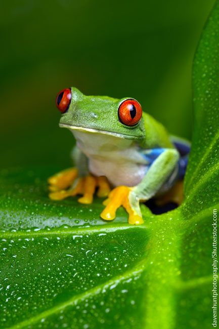 Rainforest Animals To Blow Your Mind Away